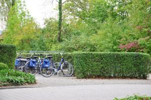 Fahrräder Insel Mainau